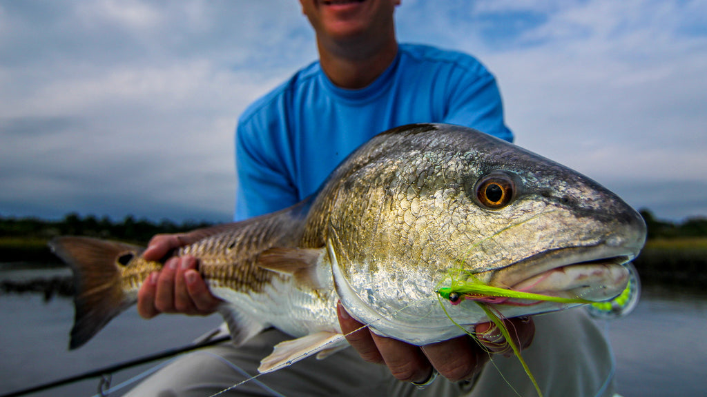 The Lowdown On Fly Fishing For Late Summer Low Tide Redfish.