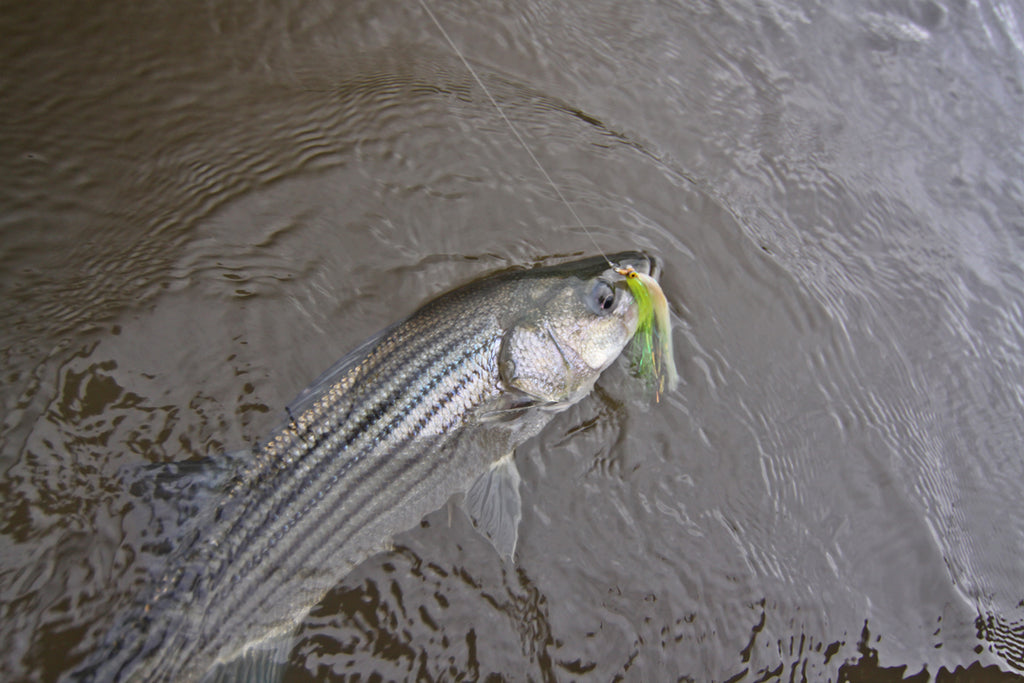 An Ode to the Clouser Minnow