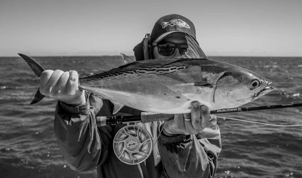 Get in on the Action - Fall False Albacore part 2
