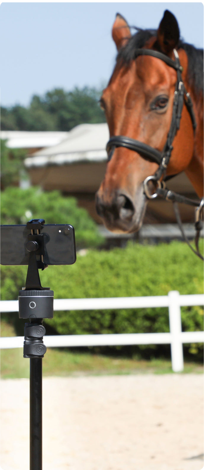 horse is tracked by cellphone mounted on pivo pod black