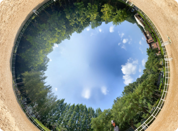 tiny planet picture with trees inside a sphere surrounded by soil