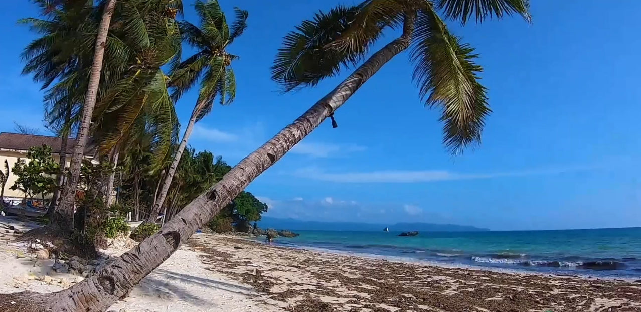 coconut tree on a sandy beach