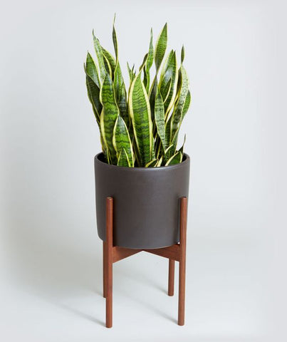 bedroom plant LOOM LIVING Snake plant for bedroom indoor plants