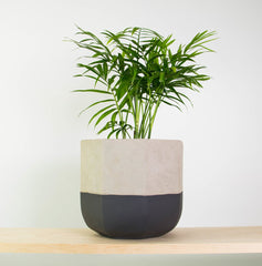Bamboo plant indoors bedroom plants LOOM LIVING