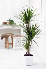 Indoor plants bamboo bedroom LOOM LIVING