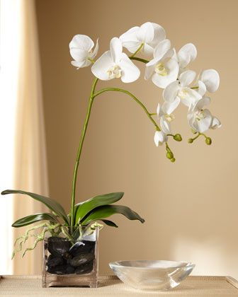 White moth orchid LOOM LIVING bedroom plants