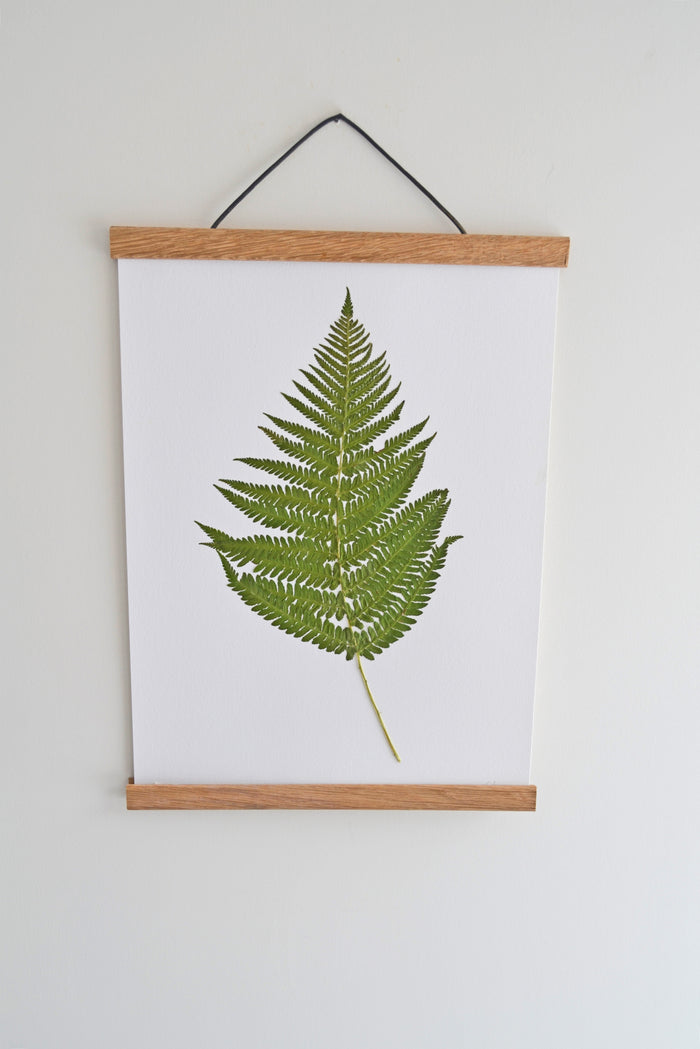 Bracken Fern (Pteridium aquilinum). Pressed plant original mounted on acid free 350gsm card.