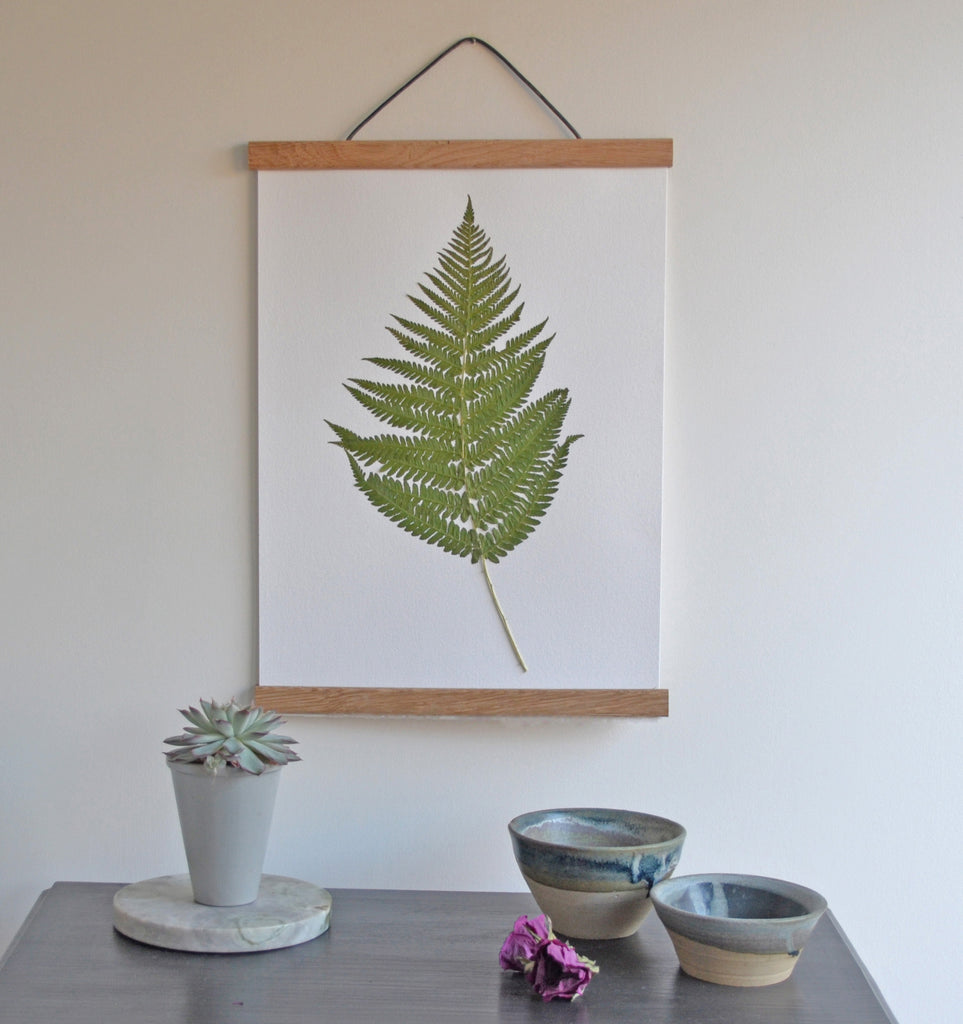 "Bracken Fern (Pteridium aquilinum) unfurled and plucked from my mothers garden; bringing the outdoors in. The bracken stem has been carefully stitched with linen thread for extra support.  Details:  A3 12"" x 16"" / 30 cm x 40 cm Mounted on acid free 350gsm card."