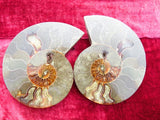 CUT AND POLISHED AMMONITE PAIR x 1 - Top Rocks