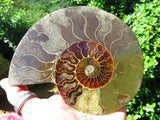 CUT AND POLISHED OPALISED AMMONITE PAIR x 1 - Top Rocks