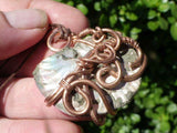 Polished Ammonite Wire Wrapped Pendants x 5 from Tulear , Madagascar