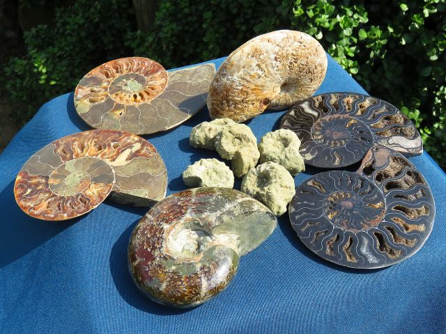 9 Mixed polished and natural ammonites - Top Rocks
