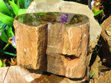 3 One side polished petrified wood logs - TopRock