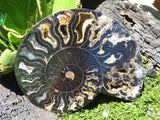 1 Cut and polished black ammonite pair - TopRock
