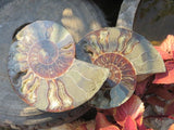 1 Cut and polished ammonite pair - TopRock