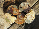 10 Cut and polished ammonite pairs - TopRock