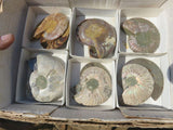 6 Cut and Polished Ammonite pairs - Top Rocks