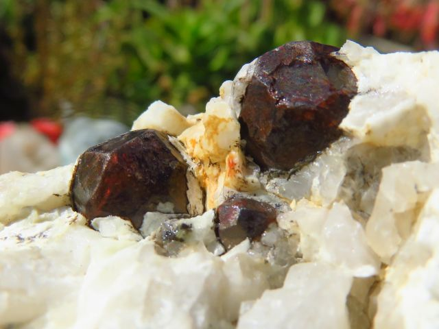 Natural Red Garnet on Matrix x 4 from Namibia, Karibib - TopRock