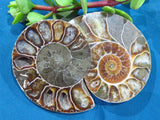 Cut & Polished Ammonite Pairs x 6 from Madagascar, Tulear