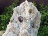Natural Red Garnet on Matrix x 5 from Namibia, Karibib - TopRock