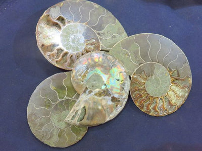 Cut & Polished Ammonite Pairs x 2 from Tulear, Madagascar