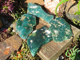 One Side Polished XL Mtorolite Plates x 4 from Mutorashanga , Zimbabwe