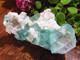 Natural Classic Riemvasmaak Emerald Fluorite Specimens x 12 from Northern Cape, South Africa