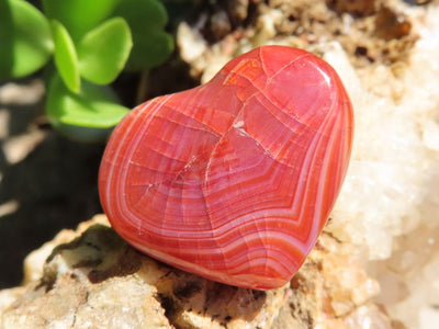 Polished Small Carnelian Hearts x 1 Lot from Madagascar