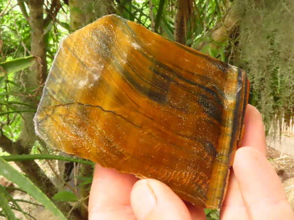 Polished One Side Medium Tigers Eye Slabs x 12 from Prieska, South Africa