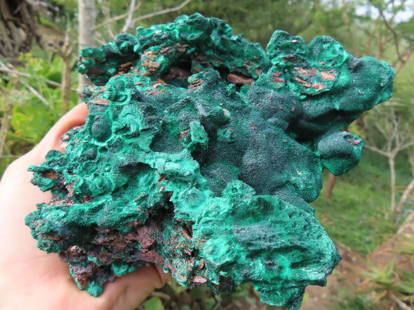 Natural Extra Large Silky Malachite Highly Chatoyant Specimen x 1  from Kasompe, Congo