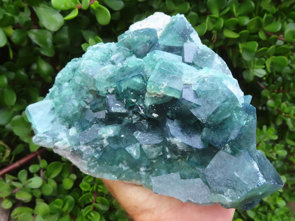 Natural Green / Purple colour changing Cubic Fluorite Specimen x 1  from Morandave, Madagascar