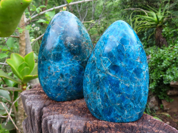 Polished Medium to Large Blue Apatite Standing Free forms x 2  from Madagascar