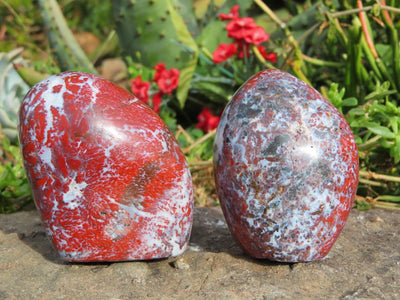 Polished Flower Jasper Freeforms x 6 from Namibia