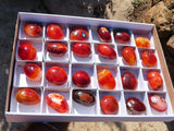 Polished Carnelian Crystal Gallets x 24 from Madagascar