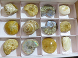 Polished & Natural mixed fossils x 15 from Madagascar - TopRock