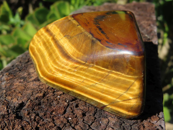 Polished Golden and Blue Tigers Eye pieces x 12 from Prieska, South Africa