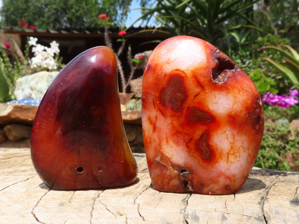 Polished Medium Carnelian Standing Free Forms x 6 from Madagascar