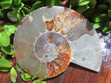 Cut & Polished Fossil Ammonite Pairs x 3 from Tulear, Madagascar
