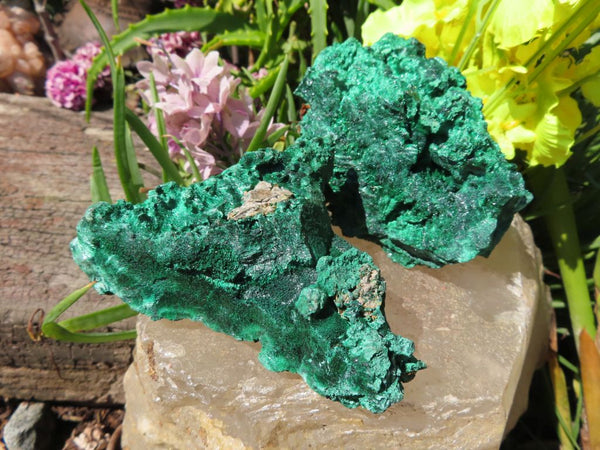 Natural Silky Malachite Specimens x 5 from Kasompe, Congo