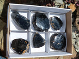 Polished Black Tourmaline Crystals x 6 from Zambia
