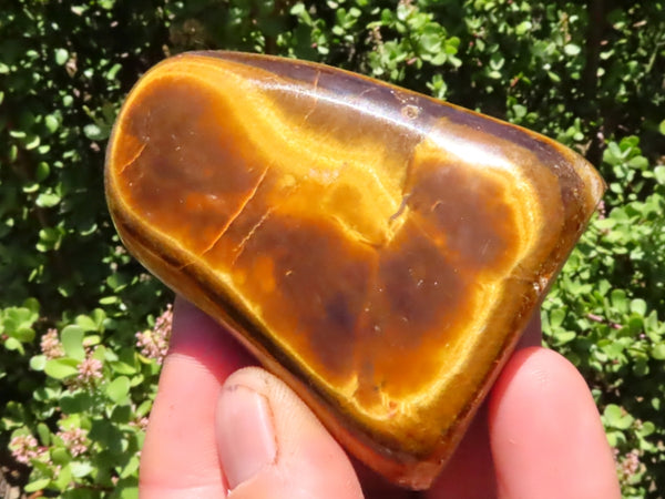 Polished Small to Medium Tigers Eye Free Forms x 12 from Prieska, South Africa