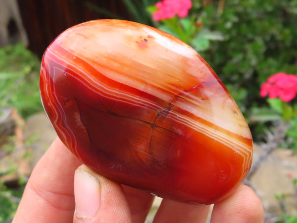 Polished Small Carnelian Free Forms x 12 from Madagascar