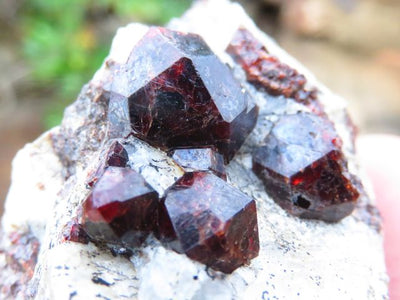 Natural Pyrope Garnets on Matrix Specimens x 15 from Madagascar