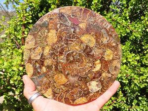 Polished Medium Oceanic Fossil Plaque Coaster x 1