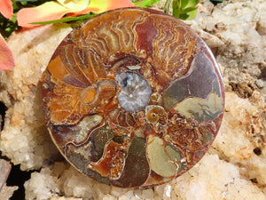Polished Small Oceanic Fossil Plaque Coaster x 1
