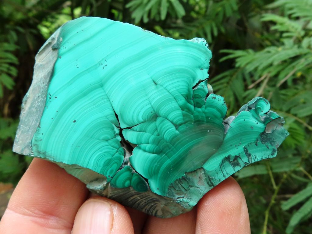 Polished Small to Medium Malachite Slices x 12 from Congo