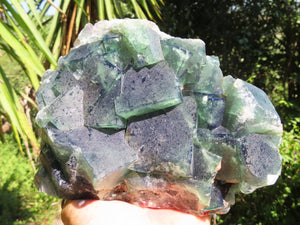 Natural XL Green Cubic Fluorite Specimen x 1 from Madagascar