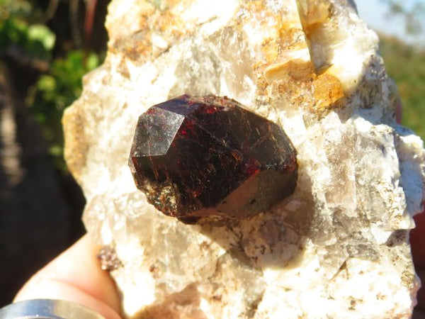 Natural Pyrope Garnet Crystals on Matrix x 3 from Madagascar