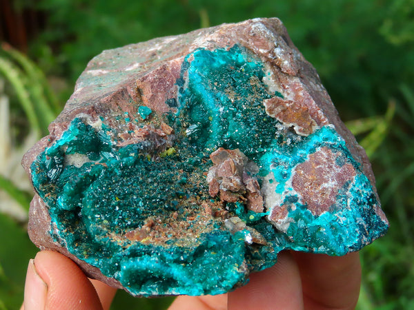 Natural Medium Dioptase Specimen x 1 from Brazzaville, Congo