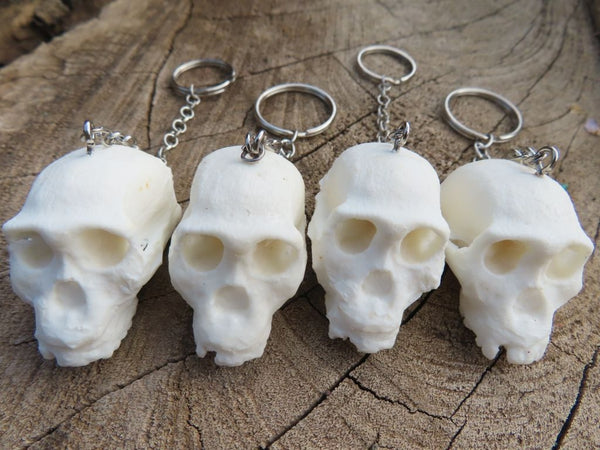 Merchandise Australopithecus sediba Skull Key Ring - sold per piece From Malapa Cave, South Africa - TopRock